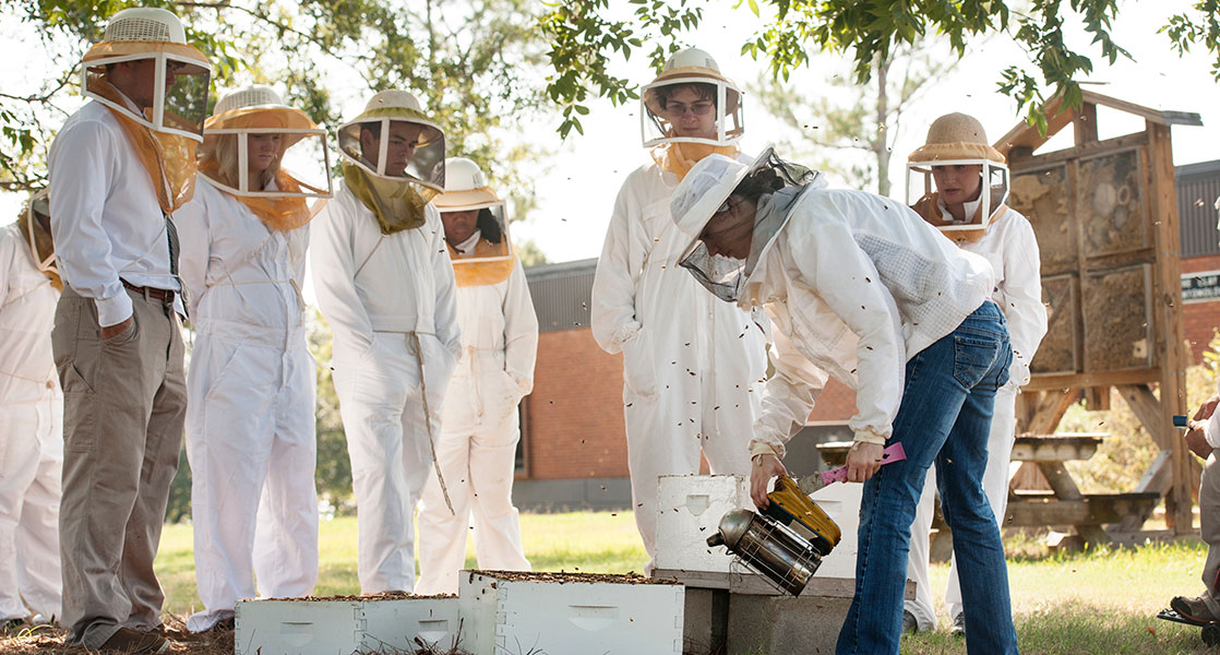 individuals watching someone remove bees from hive