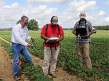 Cotton Yields Increase With New Technology